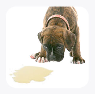 Potty Training Puppies on How To Potty Train Your Puppy   The Paw Print   21st Century Pet