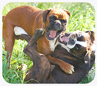dog sibling rivalry