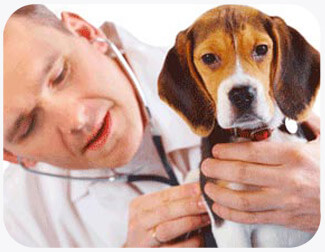 Spaying and Neutering Your Pet
