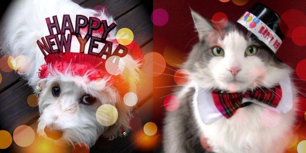 happy-new-year-pets
