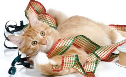 holiday-pets-1