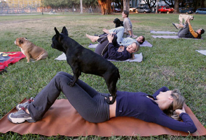 Pet-Exercise
