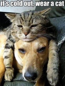 funny-cats-and-dogs-it-s-cold-out-wear-a-cat