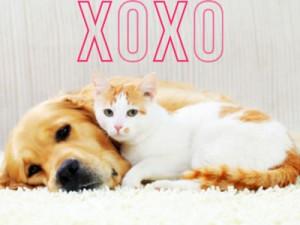 valentine-pets