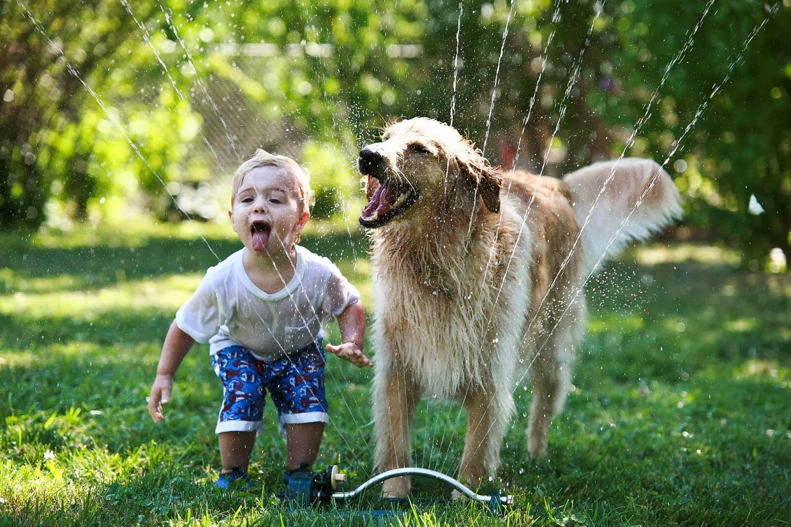 Part-time Pets Good for Kids and Animals Part-time Pets Good for Kids and Animals new foto