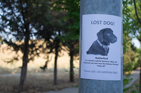 Lost dog poster and preventions for dog and cat parents