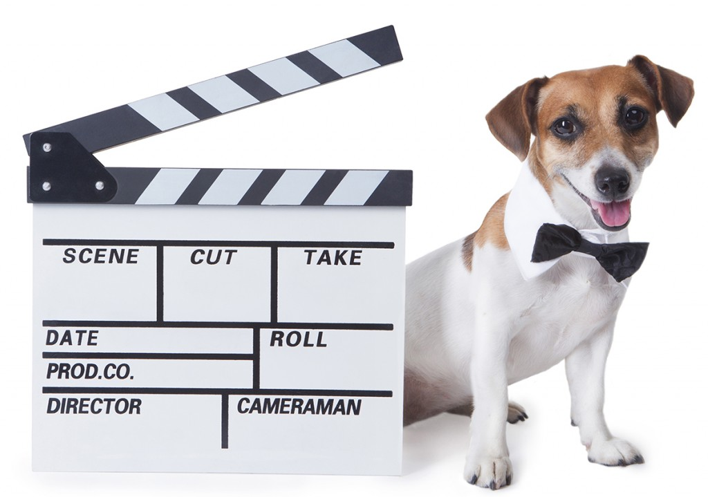 Pet movie star
