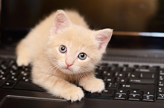Kitten plays on a computer keyboard