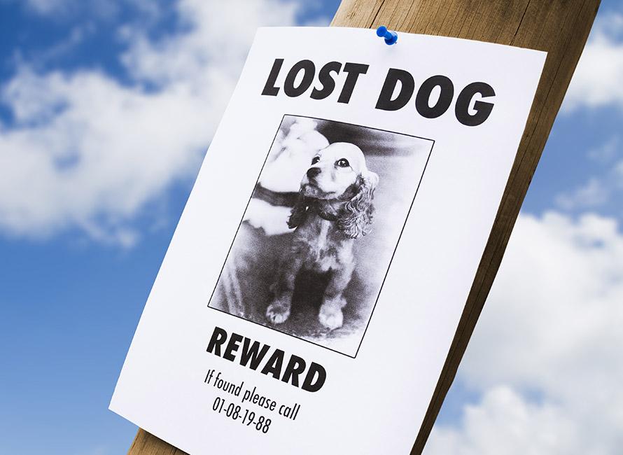 lost puppy poster on a lightpost