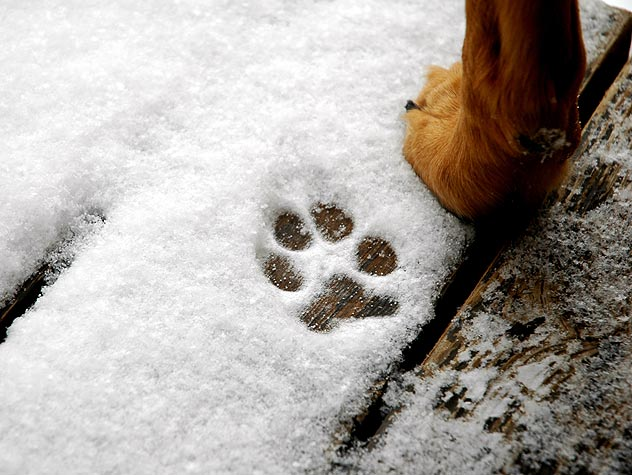 139856735-cold-weather-dog-paw-care-632x475
