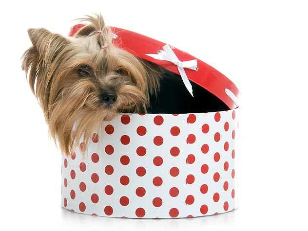 154138434-pets-as-holiday-gifts-632x475