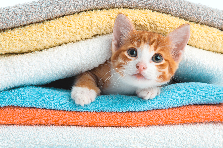 Red kitten lying on a clean towel