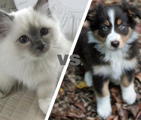 cat-vs-dog