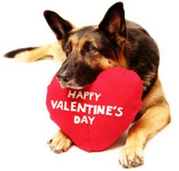 valentines day pet