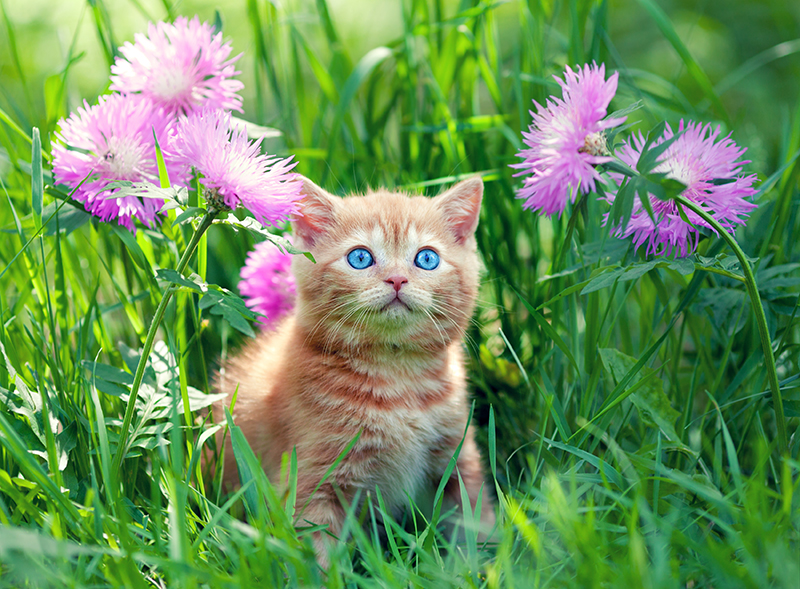 pretty cat in grass