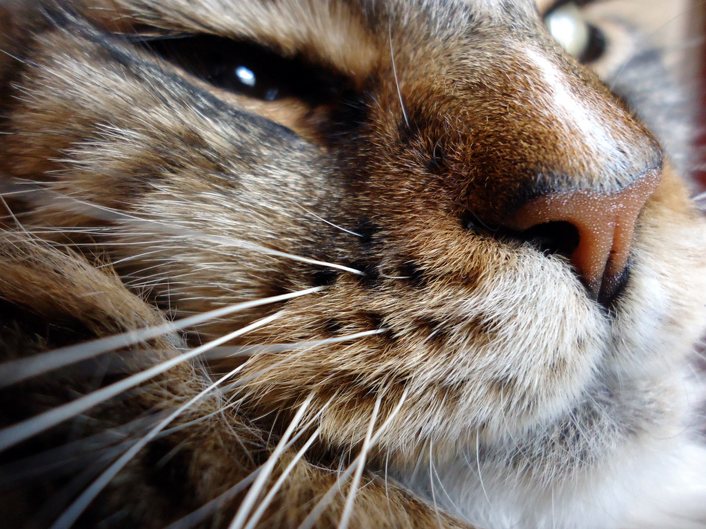 cat whiskers | The Paw...