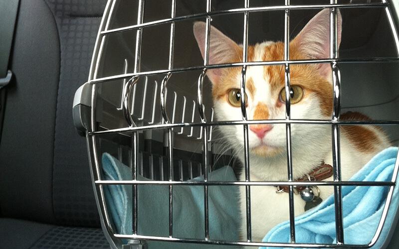 cat in car in its crate