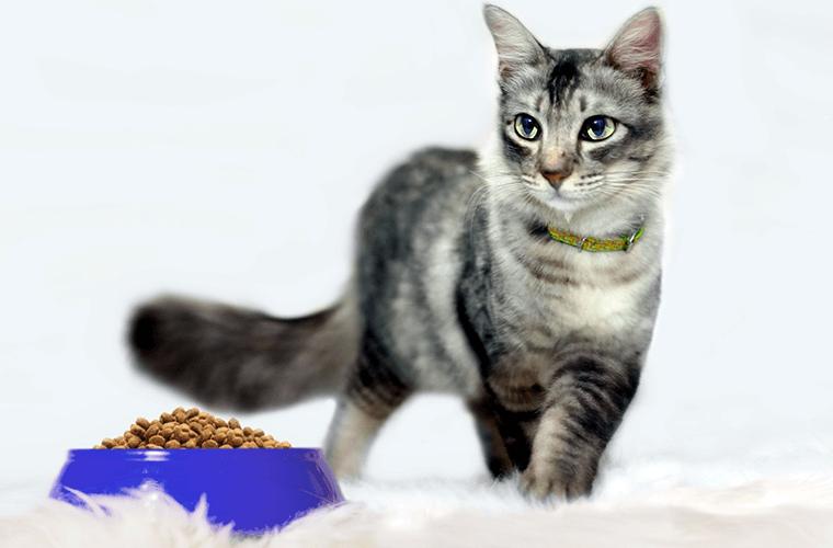 cat near food bowl