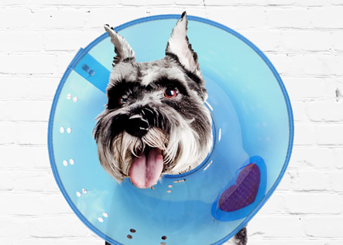 dog with a cone on
