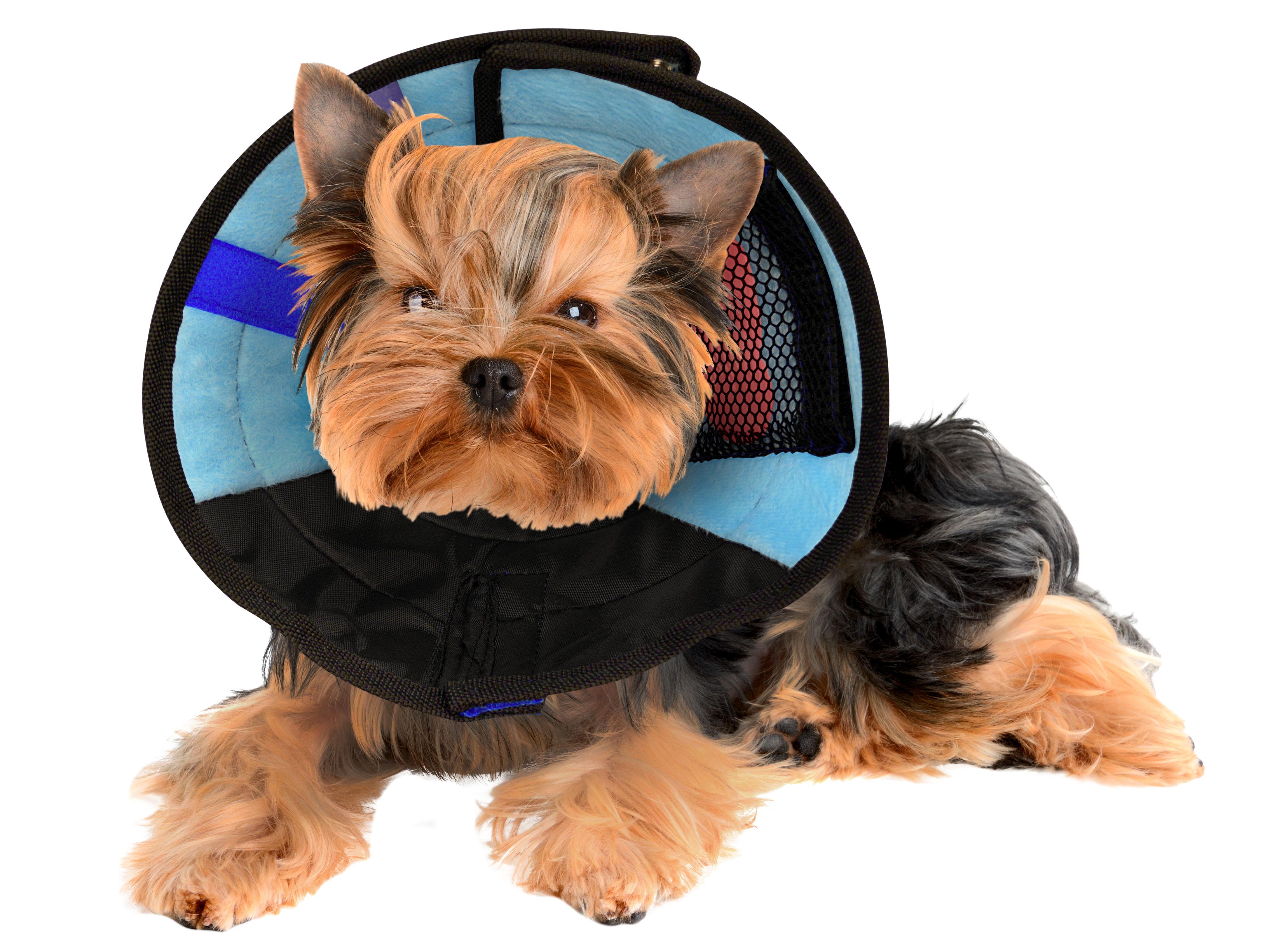 soft collar on small dog