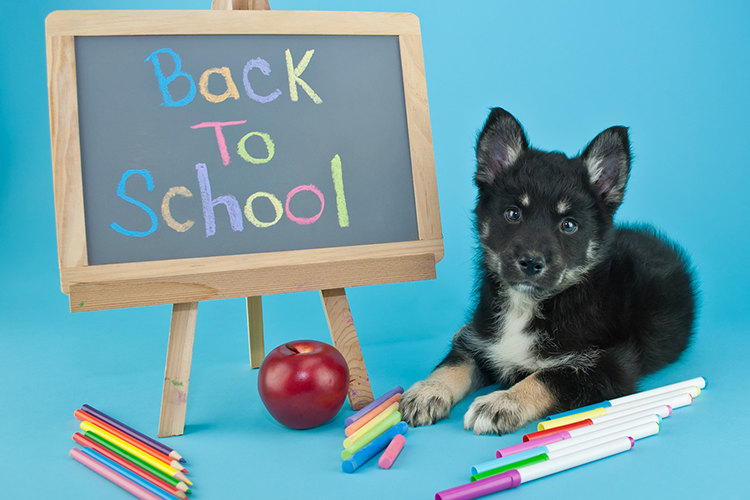 dog and back to school