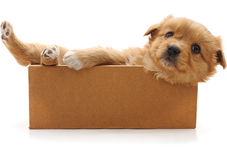 small dog in a box