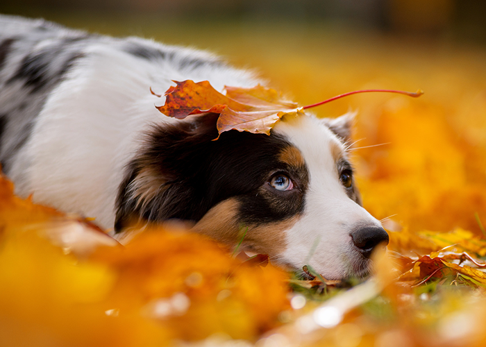 dog in grass with leaves around him