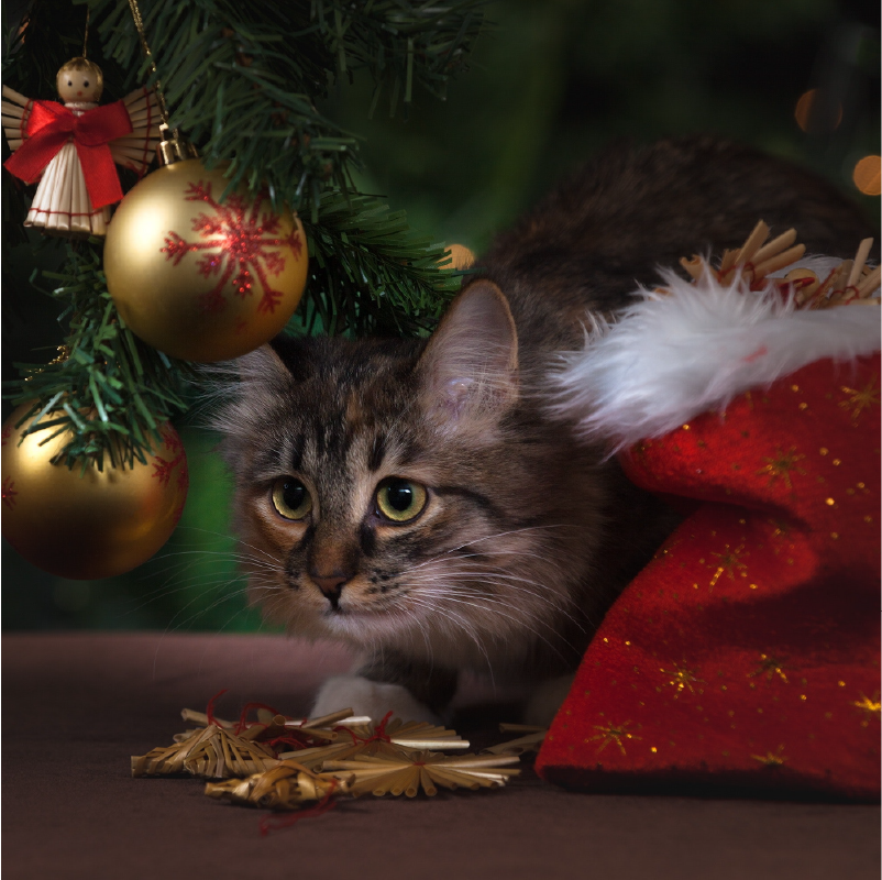 cat under christmas tree with ornaments