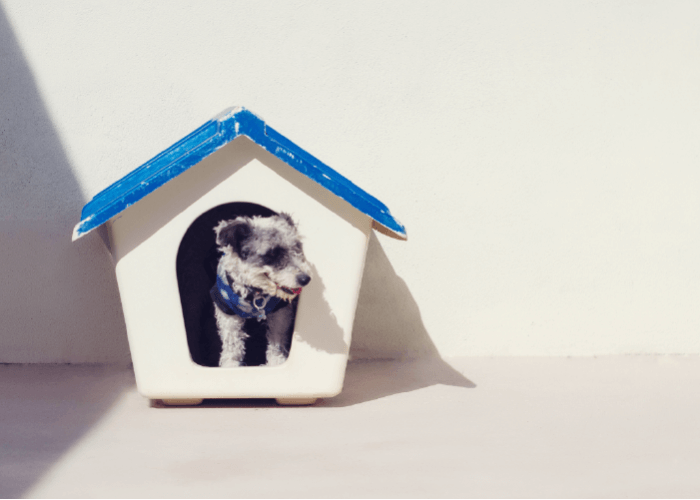 Small black and white dog poking his head out of a blue and white dog house