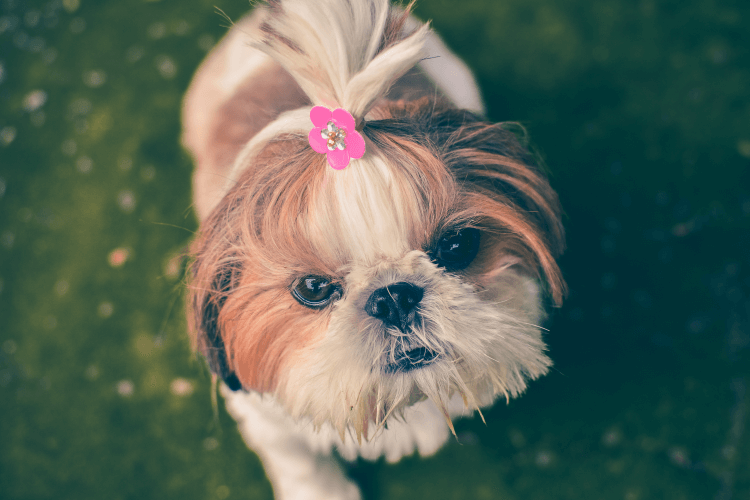 small dog with pink flower in hair