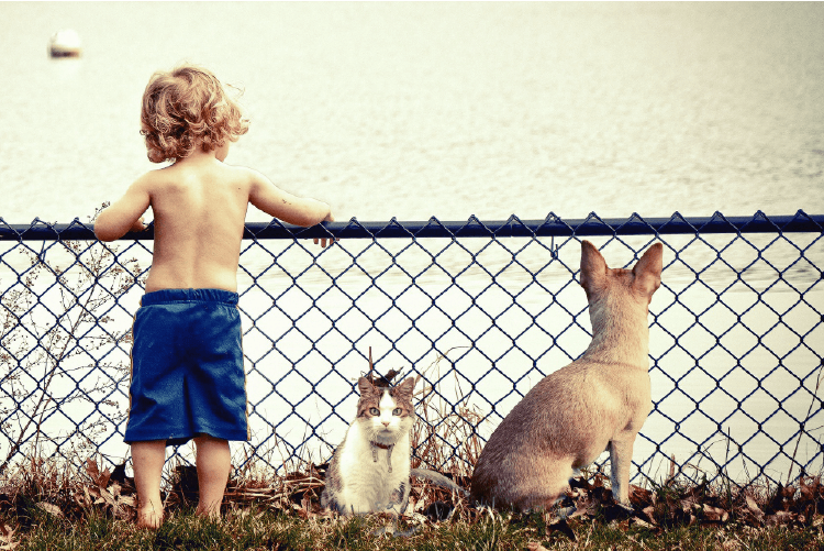 Little boy wearing blue shorts leaning against a fence next to a white and brown cat and a fawn colored dog