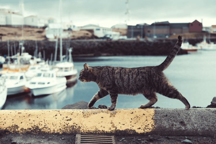 Cat walking cement wall overlooking water. 5 Cat Breeds That Love Water