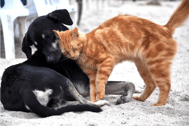Black dog and orange cat snuggling on the beach
