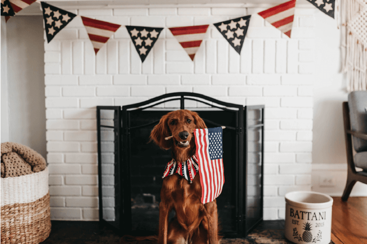 How to Handle Firework Fear, brown dog holding American flag in front of white fireplace with american flag bunting banner