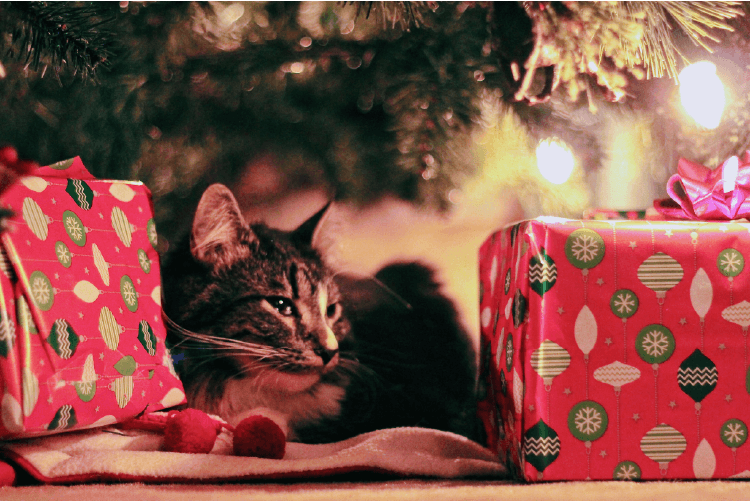cat under the christmas tree, sitting next to gifts. holiday tips from your cat