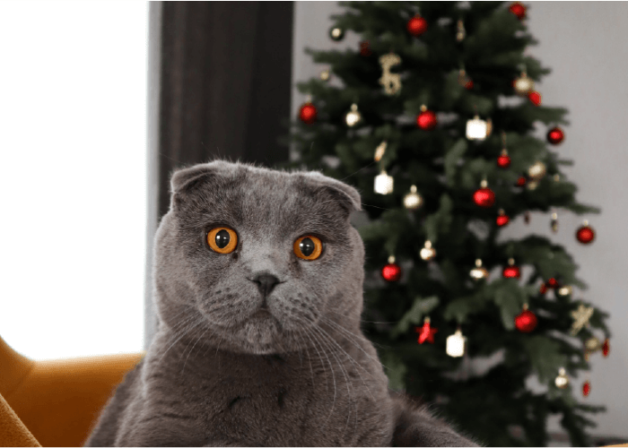 Grey cat on a gold chair, christmas tree in background, A christmas list from your cat