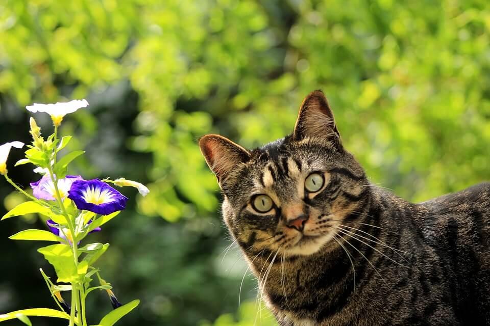 cat in garden ready for spring