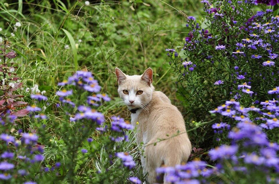 cat looking at camera in garden