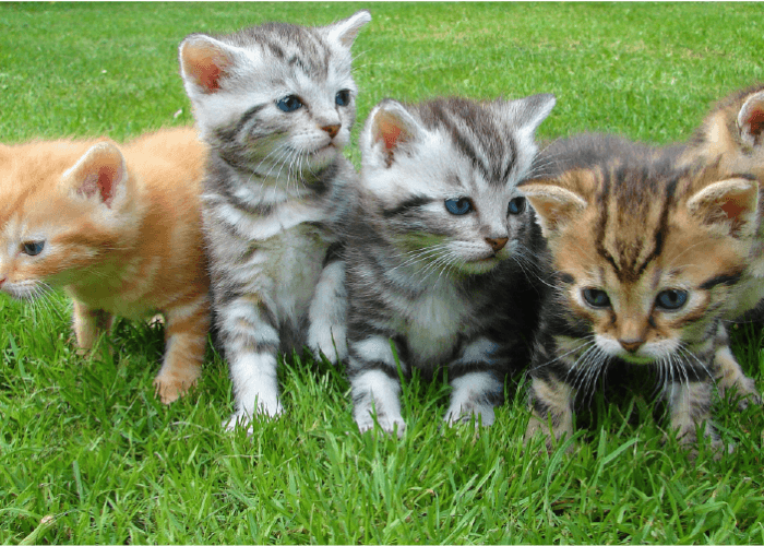 four kittens sitting in the grass