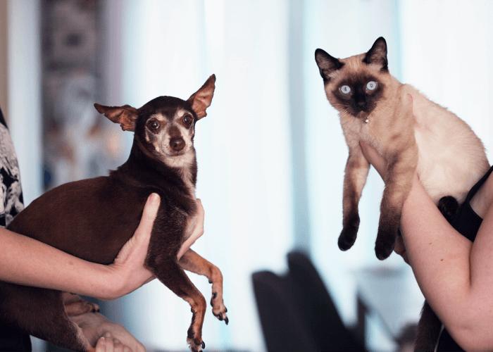small dark colored dog with a Siamese cat
